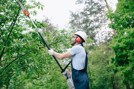 Worker using a tree trimmer to trim trees.