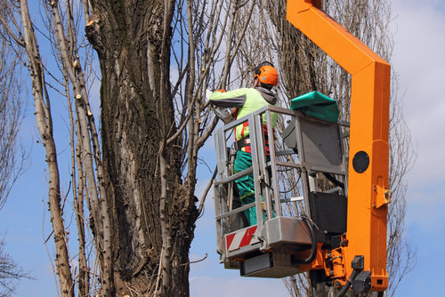 An arborist cutting branches off a tree.